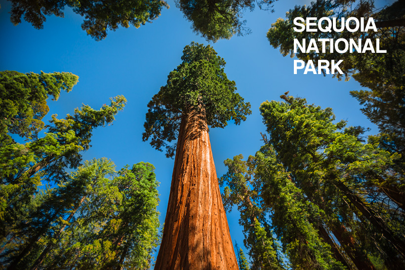 redwood trees in california map with Sequoia National Park   1 Of 3 on Gotousa 8d as well Spotlight Sequoia Kings Canyon National Parks likewise Star Wars Return Of The Jedediah Smith Redwoods besides Parques Imperdiveis Na California further Temperate Rainforest.